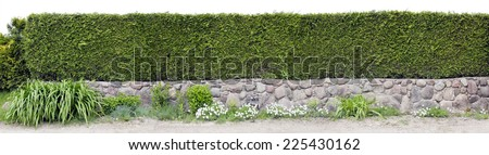Part of very long green fence hedge panoramic collage. isolated - stock photo