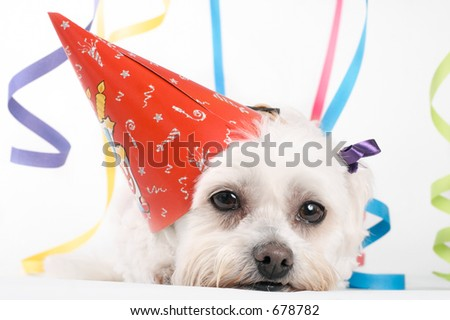 Party Pooch - Pooped - stock photo