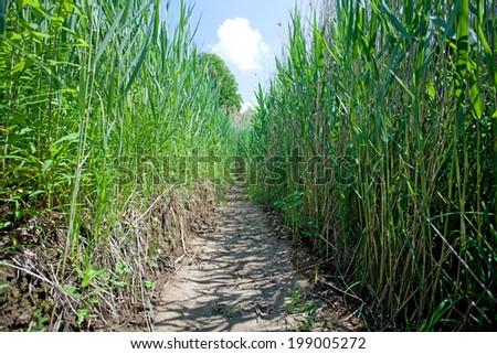 Passage through wetland - stock photo
