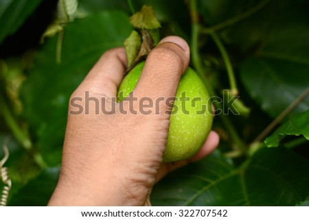 Passion Fruit in human hand - stock photo