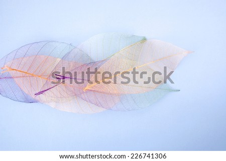 pastel color leaves texture on blue background