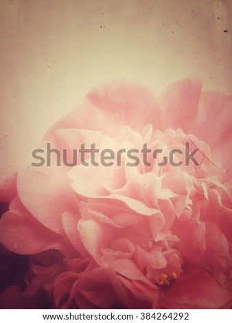 Pastel-colored flower with copy space - stock photo