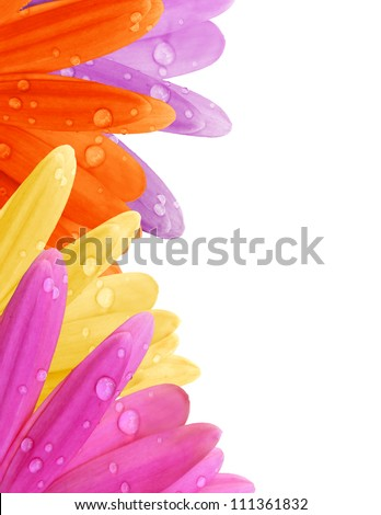 Pastel Gerbera daisy petal border with water drops in pink, purple, yellow and orange with copyspace. - stock photo