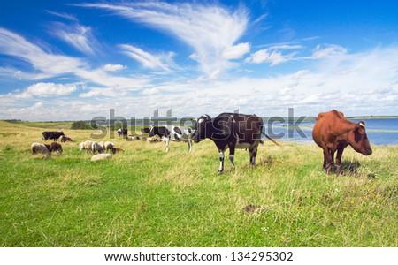 pasture - stock photo