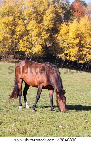 pasture horse - stock photo
