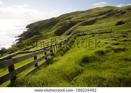 Pasture - New Zealand - stock photo