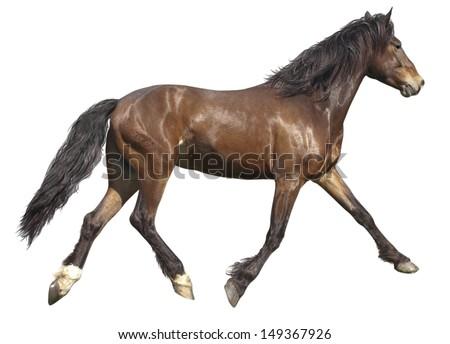 Pasture, summer day. bay horse runs - stock photo