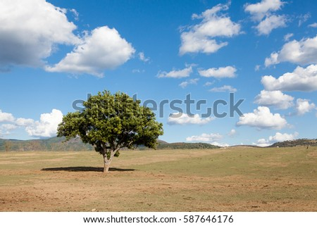 pasture with lonely tree