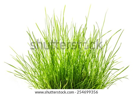 Patch of fresh green grass on white - stock photo