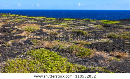 Patches of grass on old lava flow in Volcanoes National Park, Hawaii Big Island.