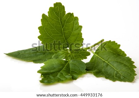 Patchouli isolated on white background.