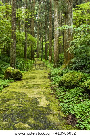 path among green forest