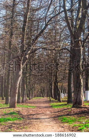 path between trees in the park in spring