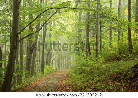 Path by early autumn forest. - stock photo