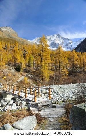 path crossing a wooden bridge leading to a high summit. The larch pines have turned golden in the fall
