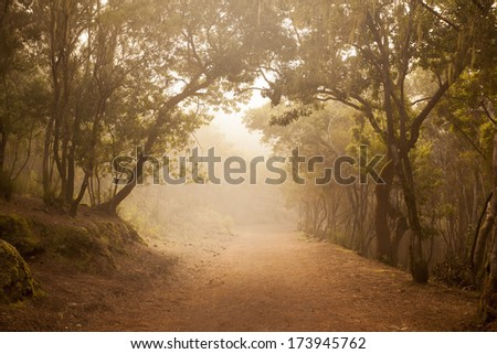path in a foggy forest