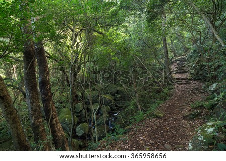 Path in a lush and verdant forest and small and rocky stream below at the New Territories in Hong Kong, China. - stock photo