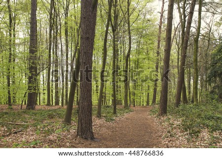 path in a springtime forest