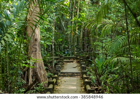 Path in a tropical rainforest in Thailand - stock photo