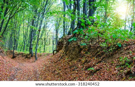 Path in autumn forest.  - stock photo