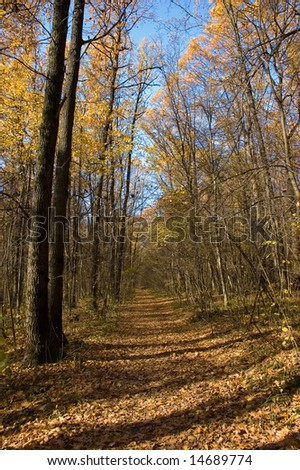 path in autumn sunny oaks forest