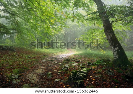 path in forest with rain and fog - stock photo