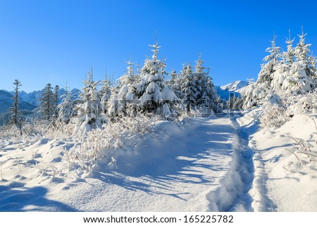 Path in fresh snow on Rusinowa Polana in winter landscape of High Tatra Mountains, Poland - stock photo