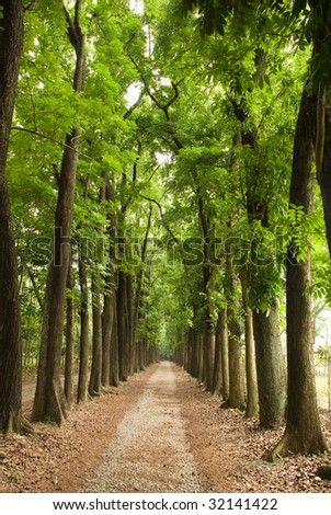 Path in  green forest - stock photo