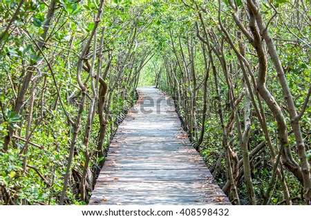 Path in mangrove forest, Thailand, Selective focus.