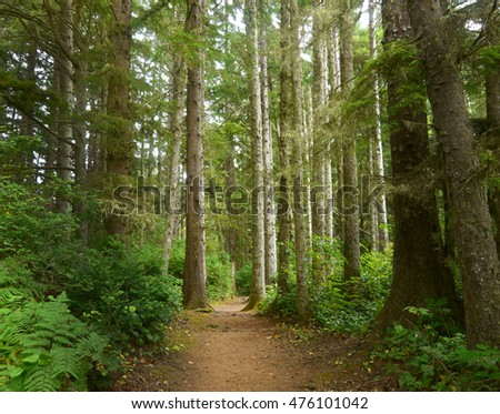 Path in Oregon forrest