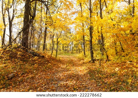 path in the autumn forest