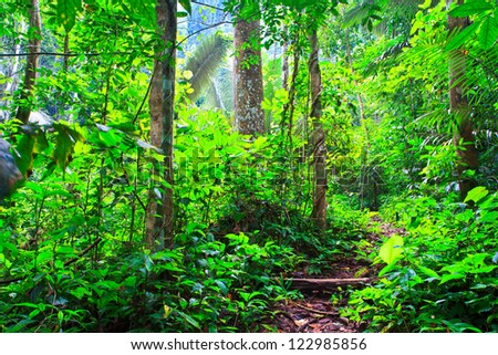 path in the forest - stock photo