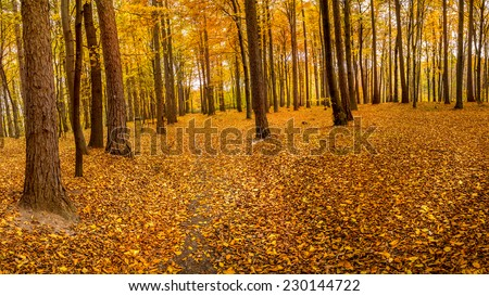 Path in the forest covered with dead leaves in fall colors - stock photo