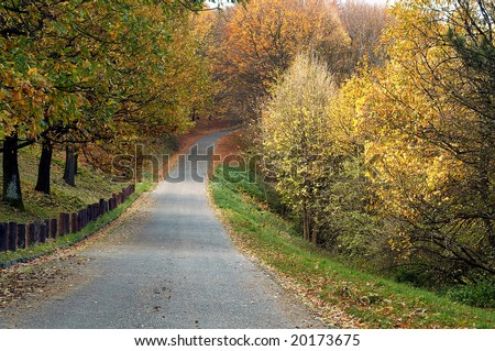 Path in the forest during autumn