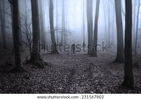 Path in the forest. Mist covers the silhouette of the trees in an autumn day - stock photo
