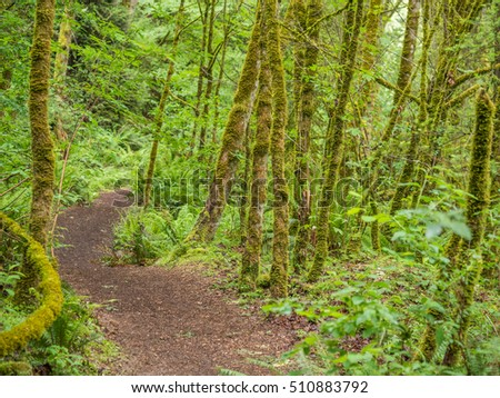 Path in the green forest.
