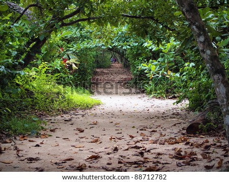 Path in the jungle of the national park of Cahuita ,Caribbean, Costa Rica, Central America - stock photo