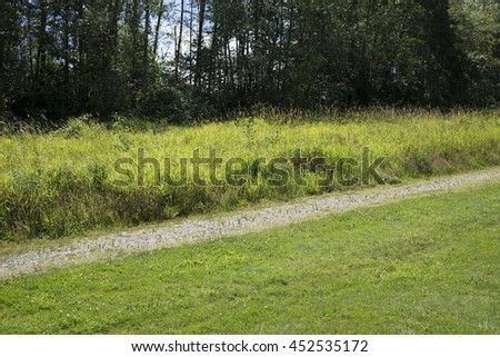 Path in the meadows near the forest - stock photo