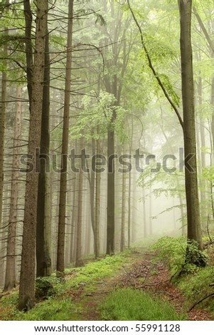 Path in the misty forest on the border between coniferous and deciduous trees. - stock photo