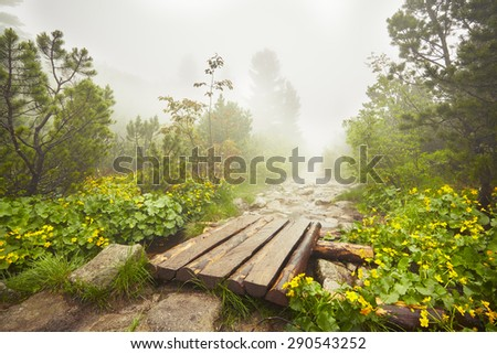 Path in the mountains in mysterious fog