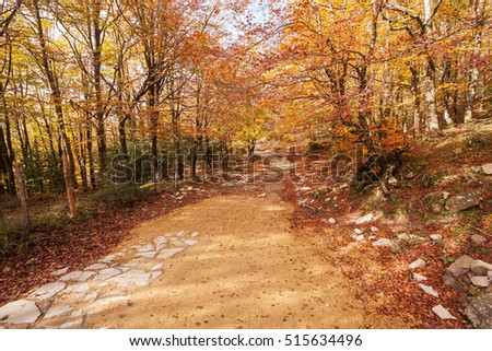Path in the wood in Autumn.