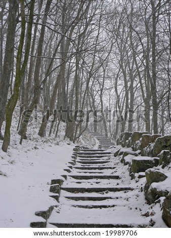 Path in the Woods - stock photo