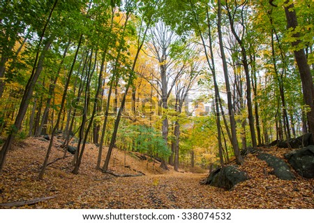 Path in the woods with fall foliage - stock photo