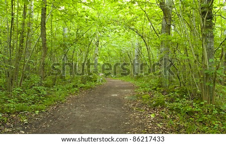 Path leading through sunlit forest, wide angle photo - stock photo