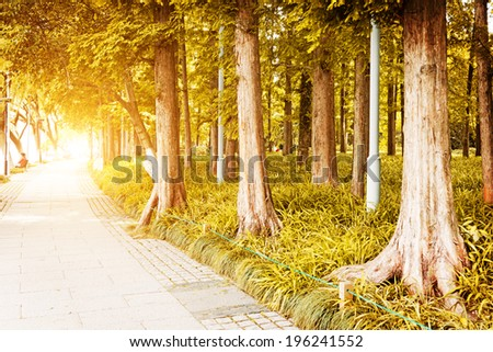 Path leading through the autumn forest on a sunny late afternoon. - stock photo