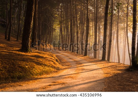 Path leading through the coniferous pine forest - stock photo