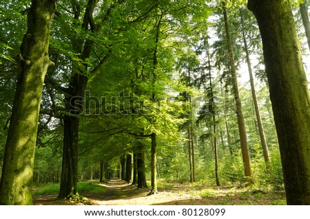 Path leading through the summer forest during the golden hour - stock photo