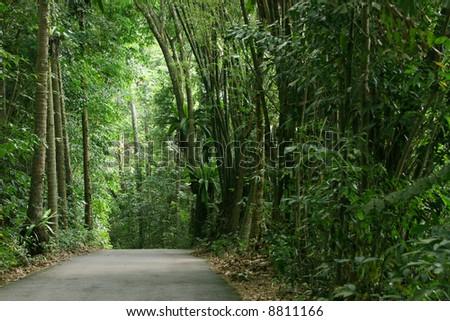 Path leading through the tropical jungles of Pulau Ubin (Granite Island), Singapore - stock photo