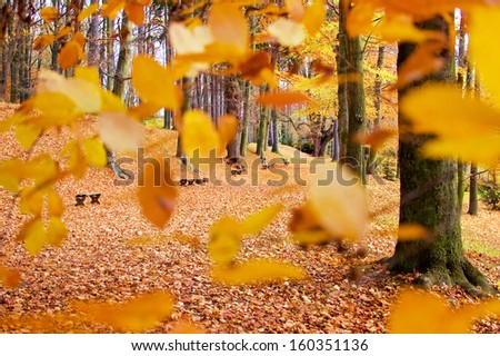 Path lined with benches in the park seen through the branches with colorful leaves. - stock photo