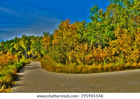 Path on a park in autumn - stock photo